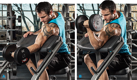 biceps workout chart step by step